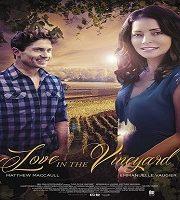 Love in the Vineyard 2016 HDTV Film